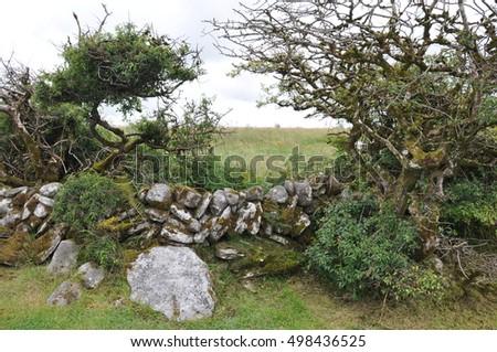 Ireland, Landscape of Burren #498436525