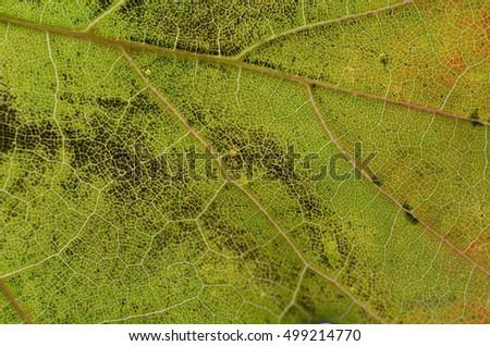 Background autumn leaf close-up #499214770