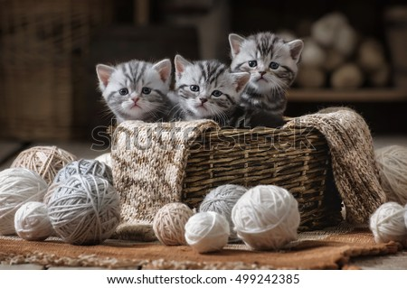 Group of small striped kittens in an old basket with balls of yarn #499242385