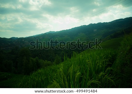 Mountain landscape of Longsheng Rice Terrace, Guilin, China, famous for the large numbers of terraced rice paddy fields on its mountain, producing an intricate pattern on the hillside. #499491484