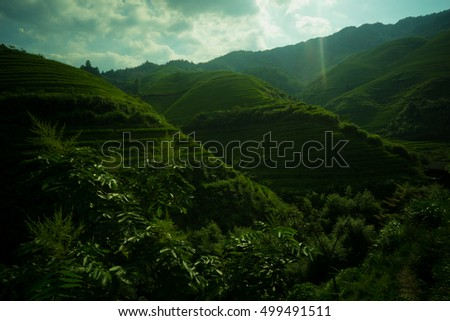 Mountain landscape of Longsheng Rice Terrace, Guilin, China, famous for the large numbers of terraced rice paddy fields on its mountain, producing an intricate pattern on the hillside. #499491511