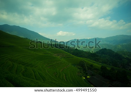 Mountain landscape of Longsheng Rice Terrace, Guilin, China, famous for the large numbers of terraced rice paddy fields on its mountain, producing an intricate pattern on the hillside. #499491550