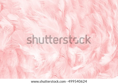 Coral Pink vintage color trends feather pattern texture background  #499540624