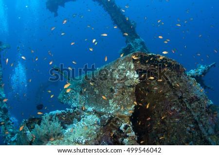 Aida wreck, Red sea, Egypt #499546042
