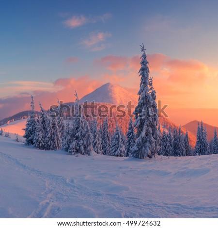 Fantastic orange evening landscape glowing by sunlight. Dramatic wintry scene with snowy trees. Carpathians, Ukraine, Europe. Merry Christmas! #499724632
