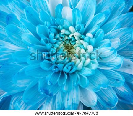 Close up of blue flower aster details for background #499849708