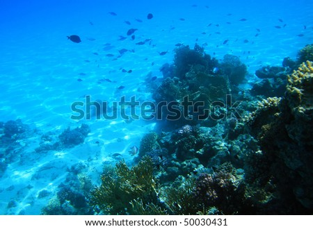 Red sea coral reef #50030431
