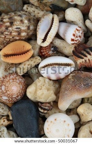 sea shells #50031067