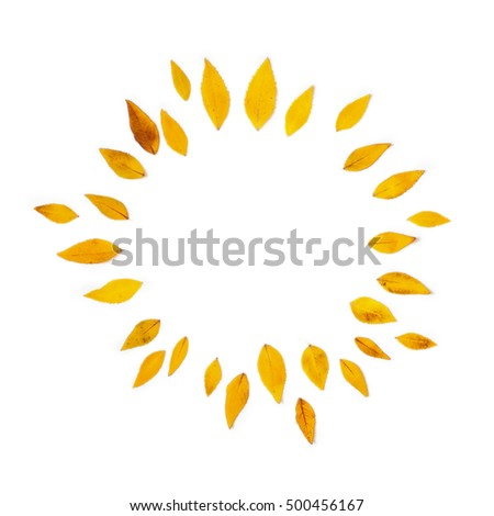 Yellow leaves arranged in round shape on white background. Flat lay, top view. Autumn leaves of Platycodon grandiflorus #500456167