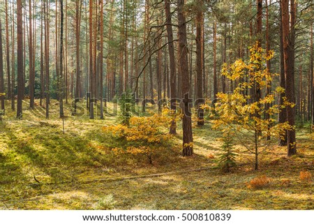 Sunny autumn forest reserve park. Scenic view. Nobody #500810839