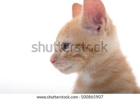 Portrait of cute kitten isolated on white background #500865907