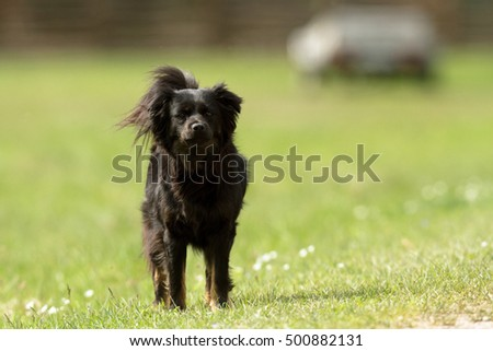 funny dog in sunny day, animals series #500882131