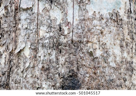 Texture of bark in the natural park,tree texture abstract for background #501045517