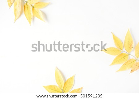 yellow fall autumn leaves. Autumn floral frame. flat lay, top view #501591235