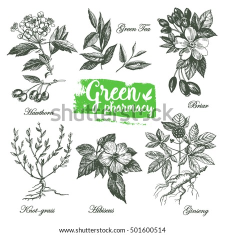 Set of graphic drawings of herbs Green Pharmacy. Set of graphic images. Illustration for greeting cards, invitations, and other printing projects. #501600514