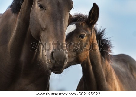 Mare and foal close up portrait #502195522