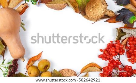 autumn inspiration. frame on white background #502642921