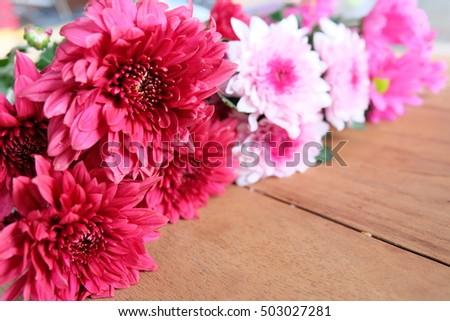 mum flowers on wooden, in valentine's day #503027281