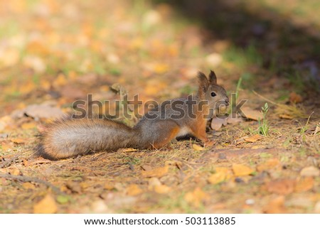 Portrait of a squirrel on a sunny autumn day #503113885