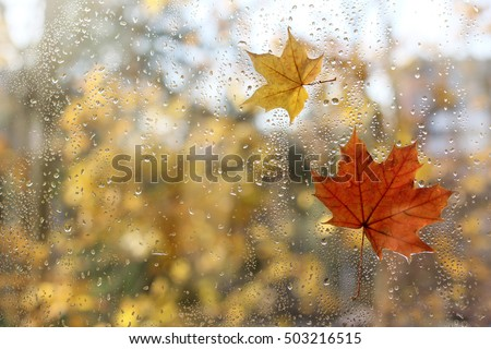 raindrops and fallen maple leaves on the window / weather characteristic autumn