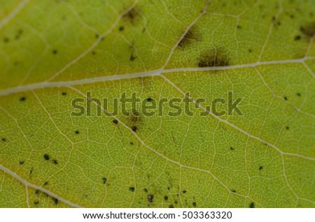 background texture of a fallen autumn leaf #503363320