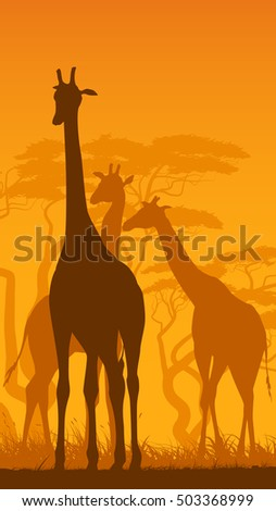 Vertical vector illustration of wild giraffes in African savanna with trees. #503368999