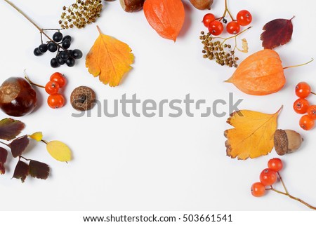 Bright yellow autumn leaves, chestnuts, pine cones and orange physalis flowers on a white background with copy space for text. Beautiful autumn frame. Top view photo #503661541