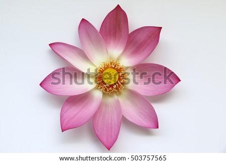 Autumn composition. Lotus flower plants. Top view, flat lay