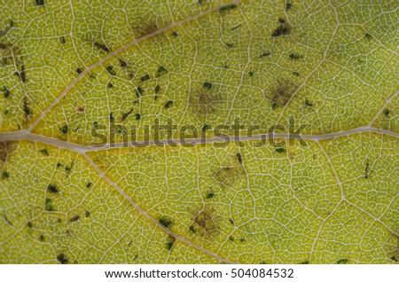 Background of fallen autumn leaf close-up #504084532