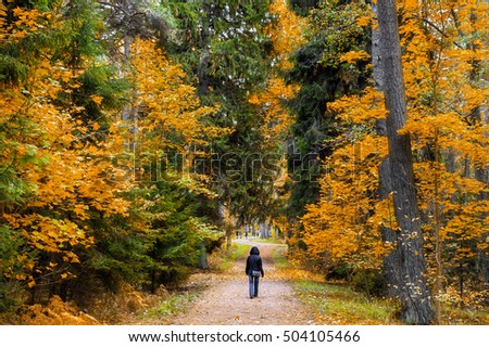 A walk in the autumn woods. Golden autumn. The colorful trees. Wildlife of Estonia. #504105466