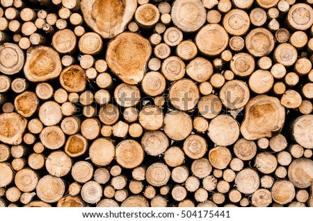 Closeup of logs of trees in nature. a lot of cutted logs. #504175441