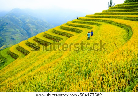 Rice fields on mountain in Northwest of Vietnam. Royalty-Free Stock Photo #504177589