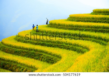 Rice fields on mountain in Northwest of Vietnam. Royalty-Free Stock Photo #504177619