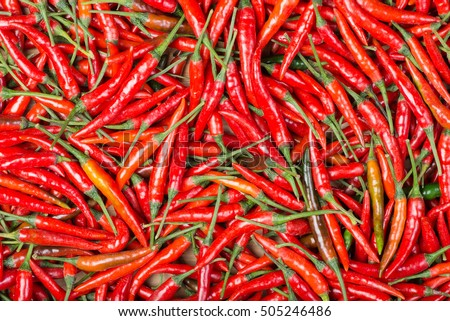 red chilli background #505246486