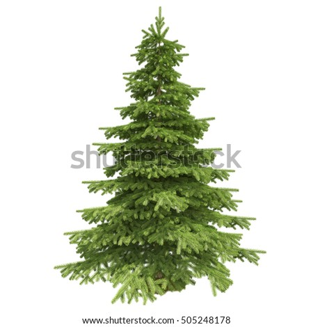 Single pine tree isolated on white background. 3D illustration. High quality #505248178