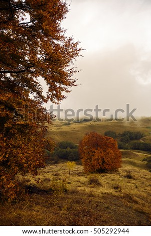beautiful landscape with trees in autumn colors #505292944