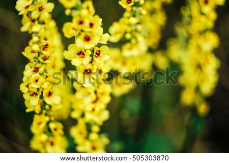 beautiful colorful yellow wild flowers on green grass background in summer #505303870