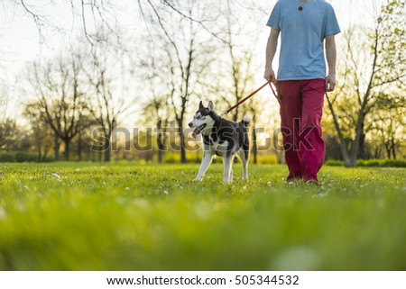 Young man walking his husky dog in a park on a sunny day #505344532