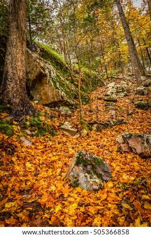 Autumn leaves #505366858