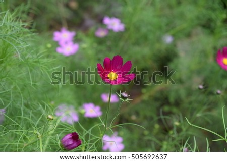 Red flower #505692637