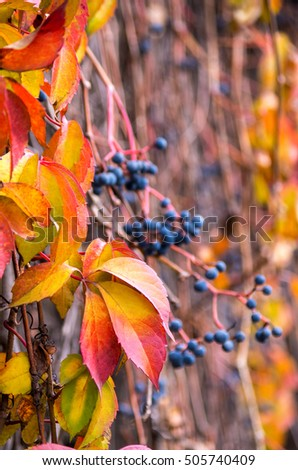 Bright autumn leaves with colorful background. Soft focus. #505740409