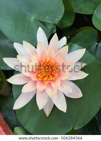 Beautiful lotus flower top view #506284366