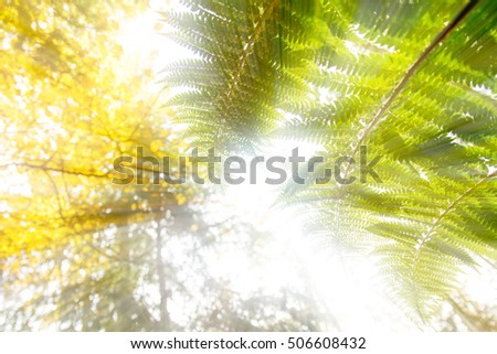 fern in the forest #506608432