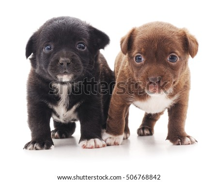Two puppies isolated on a white background. #506768842