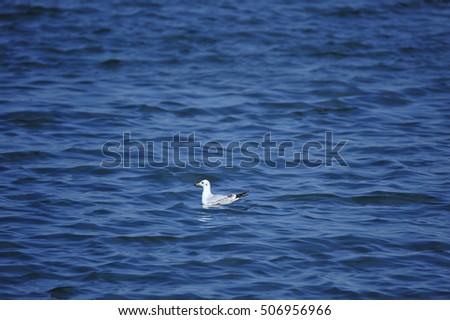 The sea bird #506956966