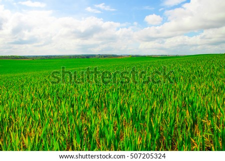 Agricultural field with green young plants #507205324