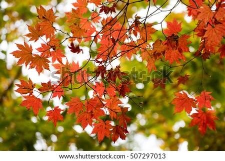 autumn leaves #507297013