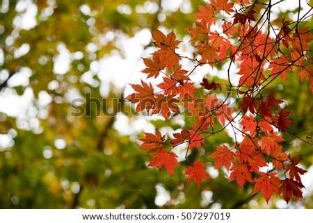 autumn leaves #507297019