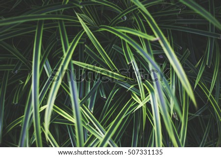 Plant leafs focus soft background and green background and nature pattern plant and shadows can use your text on the pictures
