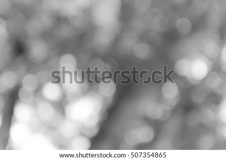 Gray black white bokeh out of focus background from nature forest #507354865